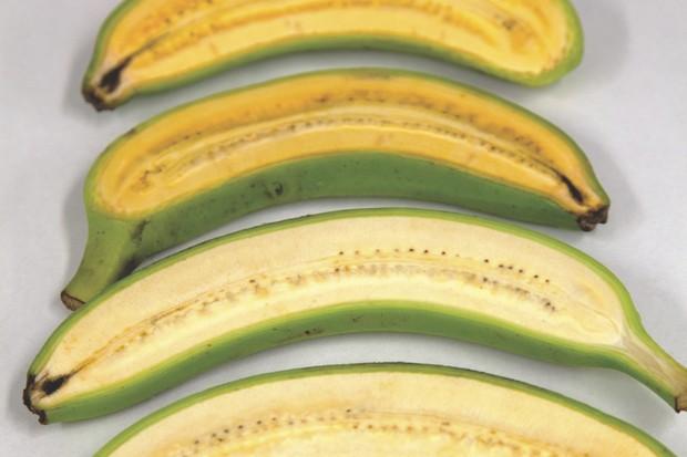 El plátano dorado (arriba) es de un color más anaranjado que un plátano estándar (abajo), gracias a los niveles más altos de provitamina A. Estos plátanos modificados pueden usarse para mejorar el contenido nutricional de los plátanos en Uganda, donde la fruta constituye una de las principales parte de la dieta © QUT