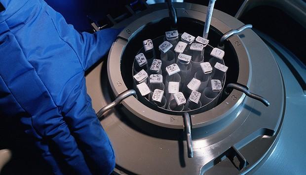 ESTADOS UNIDOS - 1 DE ENERO: Embriones humanos congelados en Nueva York, Estados Unidos, el 1 de enero de 1997 (Foto de Remi BENALI / Gamma-Rapho a través de Getty Images)