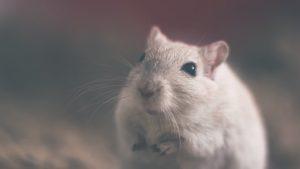 Los científicos pueden implantar falsos recuerdos en ratas » Actualidad Tecnológica